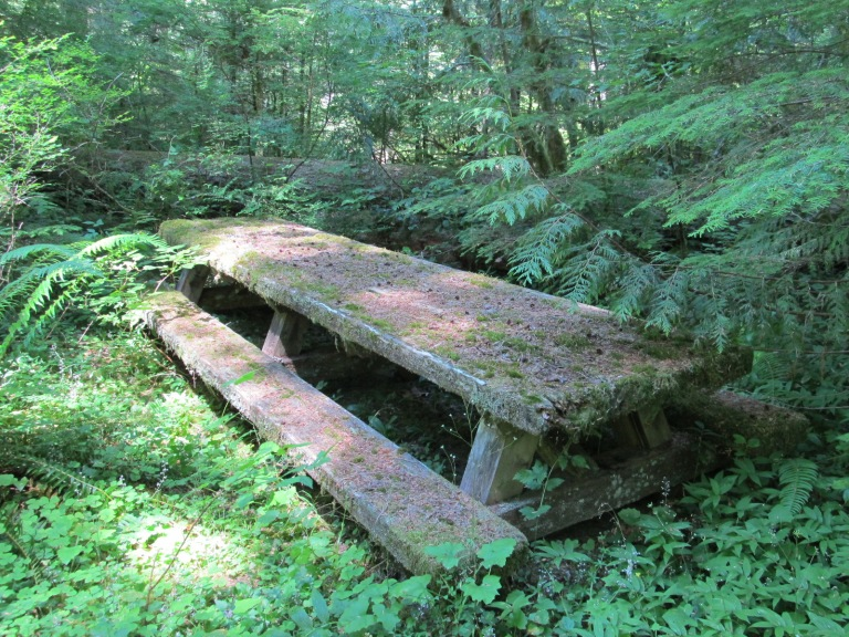 Old Salmon River Trail, August 7, 2011 039