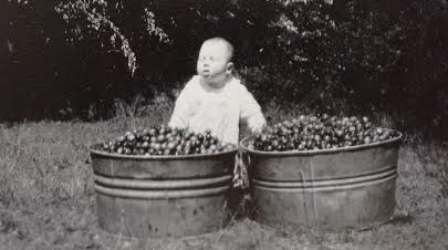 April 2016_baby Smith standing next to tubs of crabapples