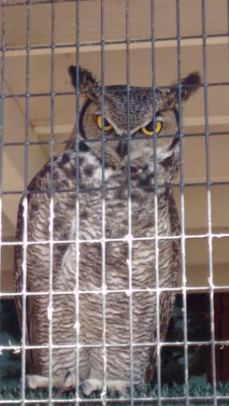 May 2016_owl 1