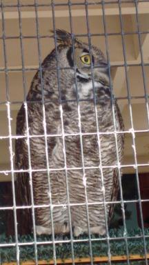 May 2016_owl 3
