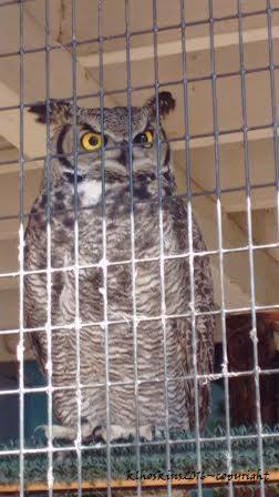 May 2016_owl