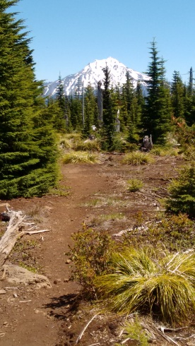 bachelor mt trail_june 2016 (47)