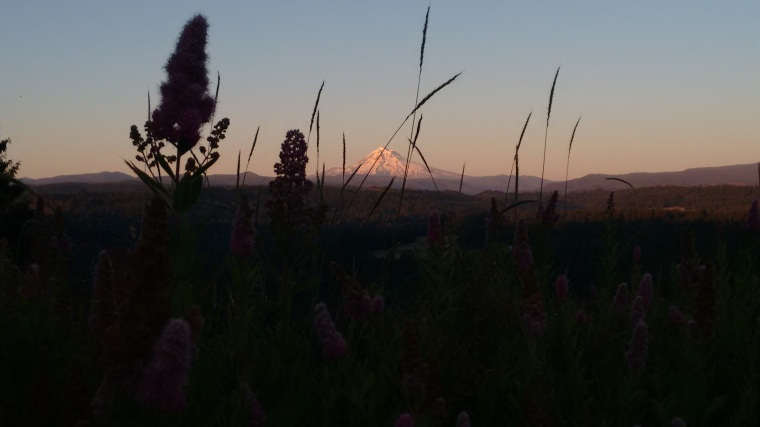 mt hood from sandy lookout_june 2016 (25)