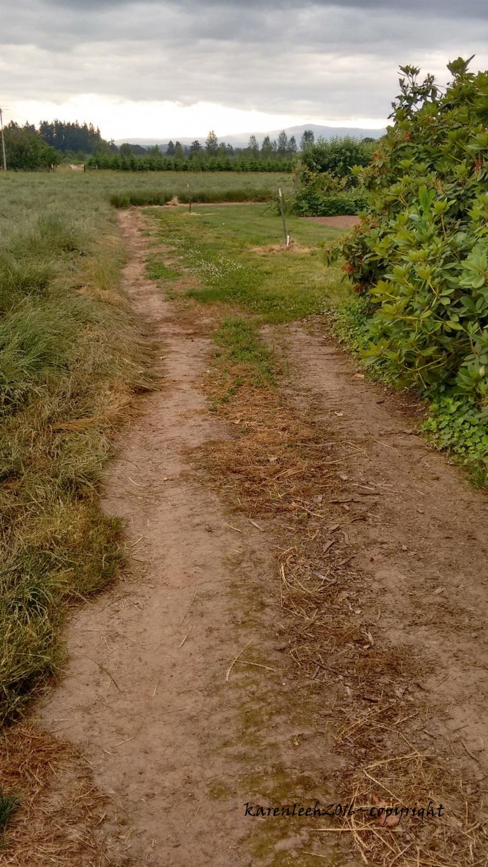 trail_june 2016 (13)