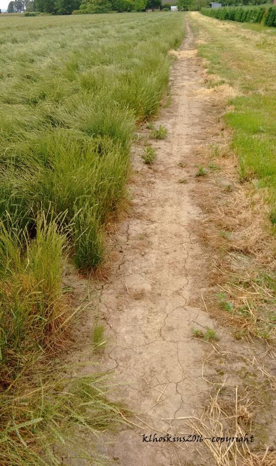 walking path_june 2016