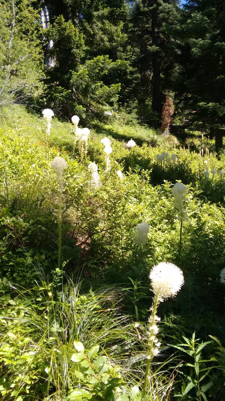 coffin mt trail_july 2016 (23)