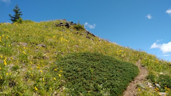 coffin mt trail_july 2016 (31)