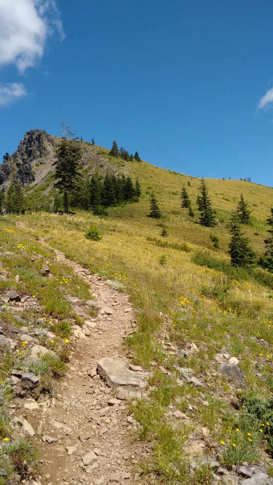 coffin mt trail_july 2016 (37)