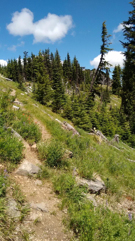 coffin mt trail_july 2016 (54)