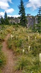 coffin mt trail_july 2016 (56)