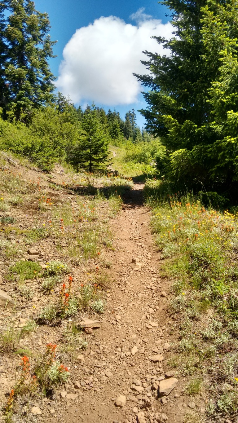 coffin mt trail_july 2016 (6)