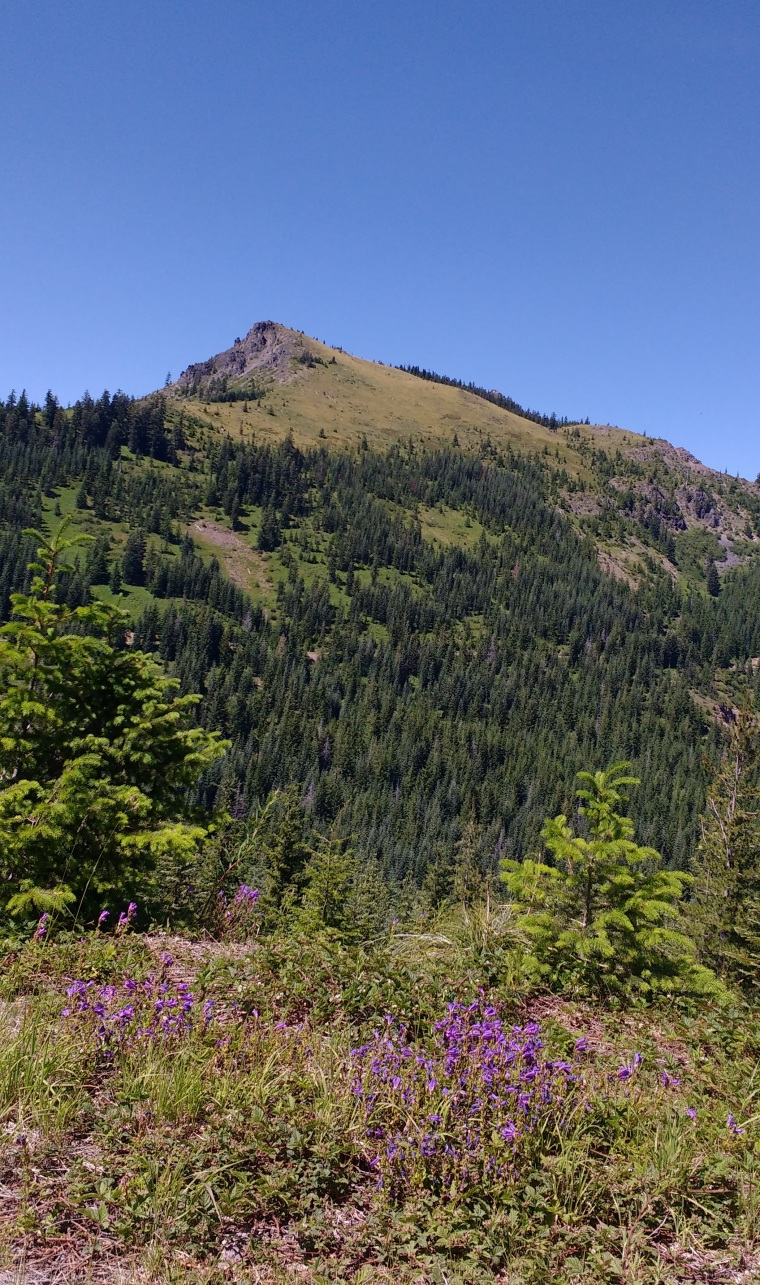 coffin_view of top from road_july 2016