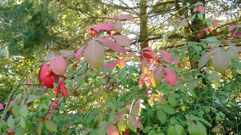 fall-color_sept-2016-7