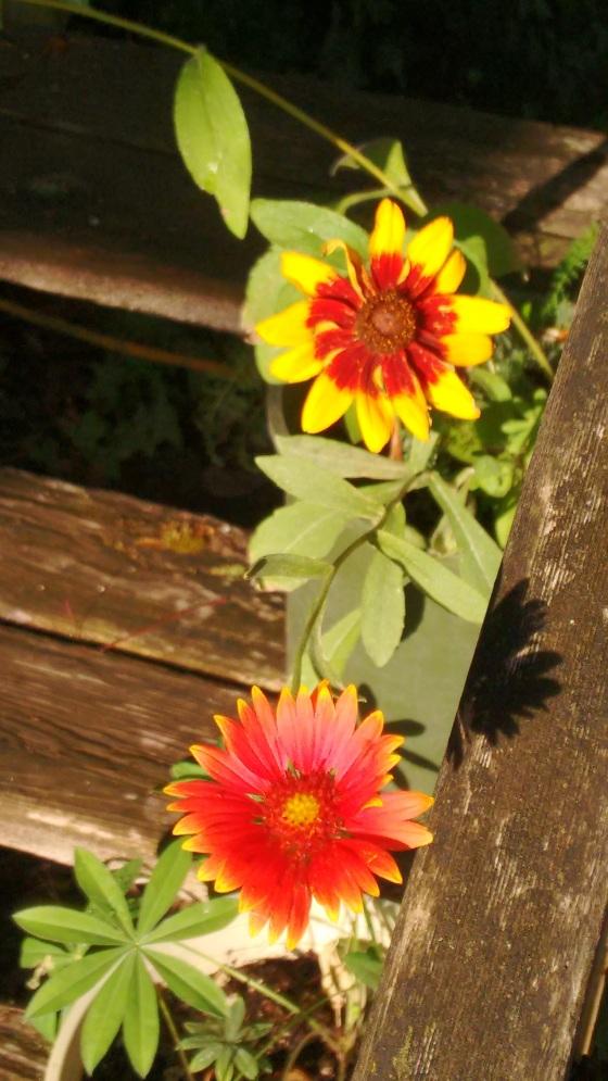 moms-flowers_sept-2016-26