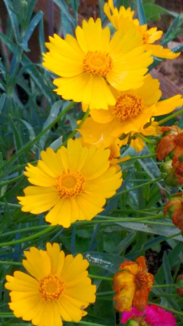 moms-flowers_sept-2016-67