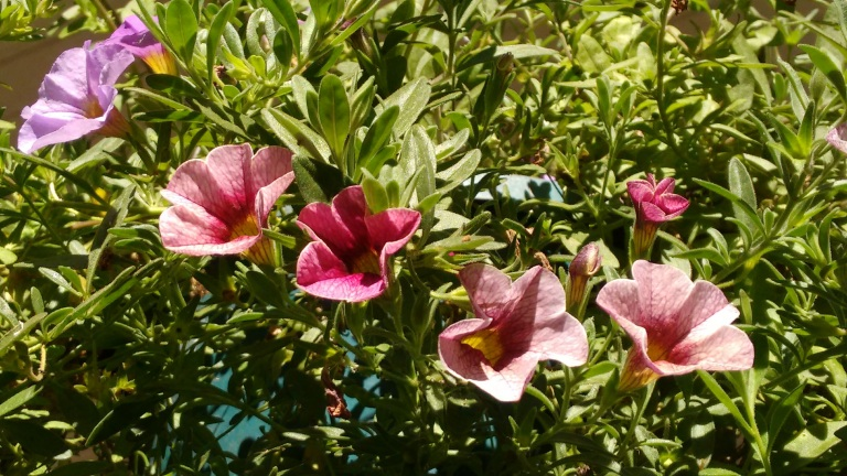 new-deck-and-fall-flowers_sept-2016-24