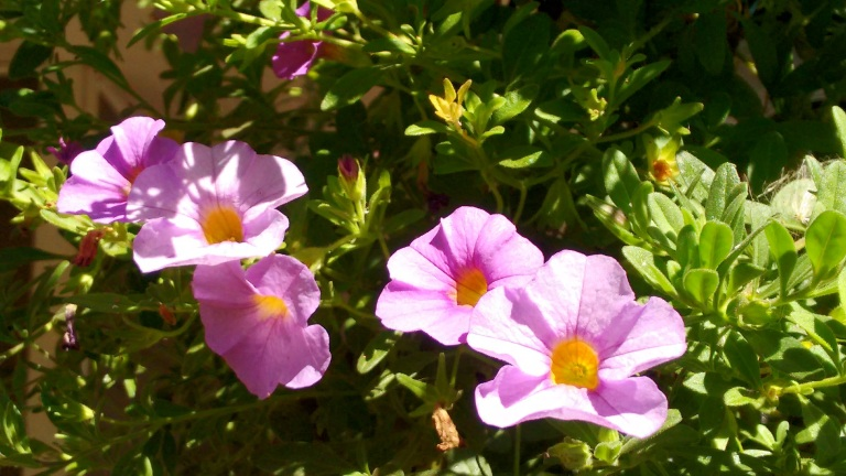 new-deck-and-fall-flowers_sept-2016-25