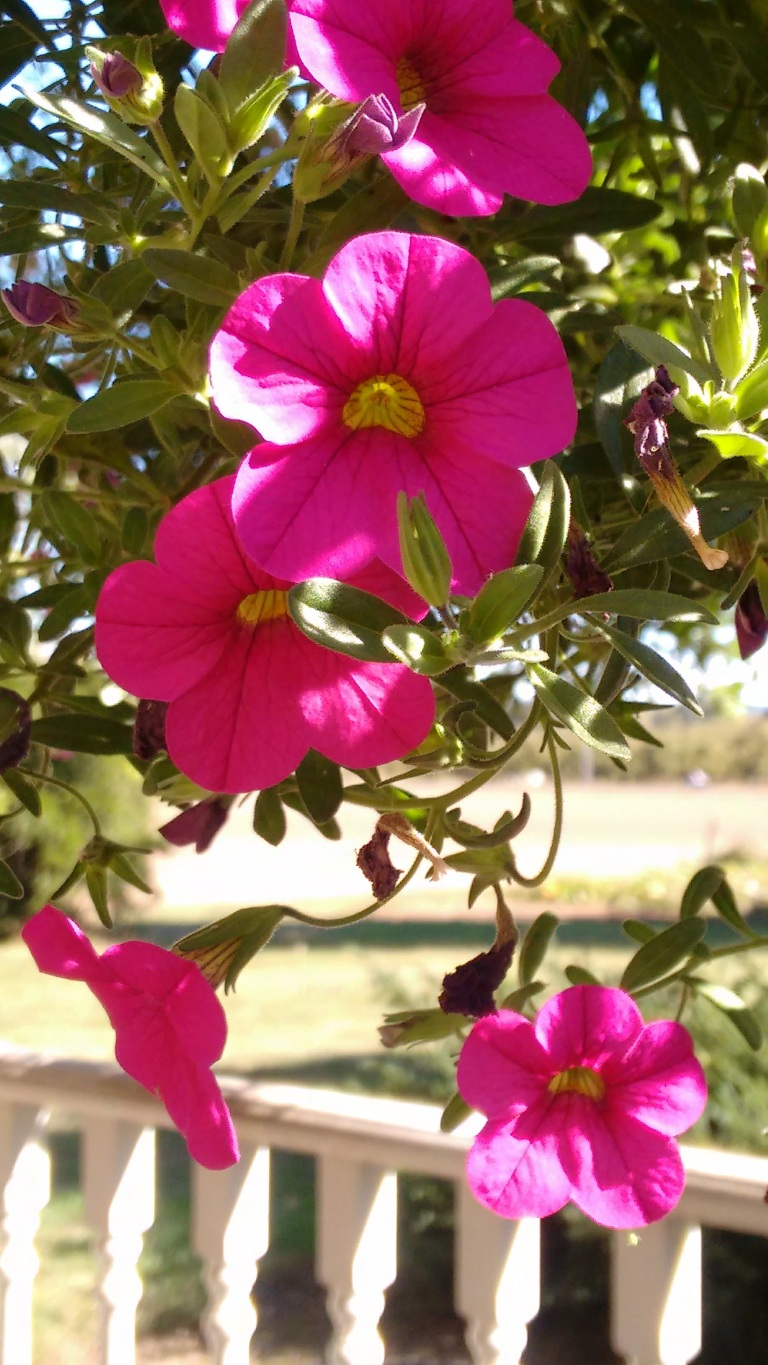 new-deck-and-fall-flowers_sept-2016-31