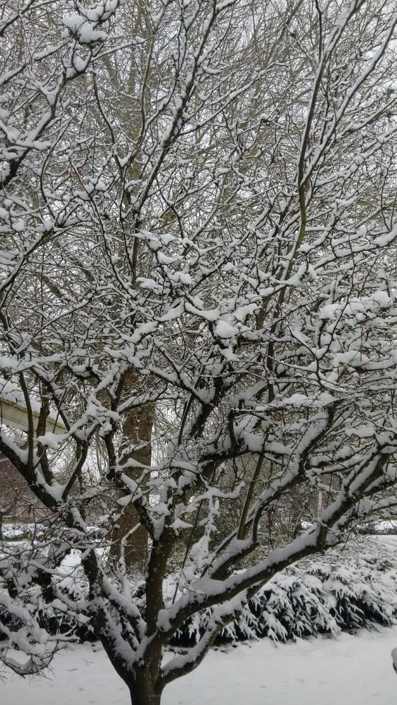 snow_dec-2016-15