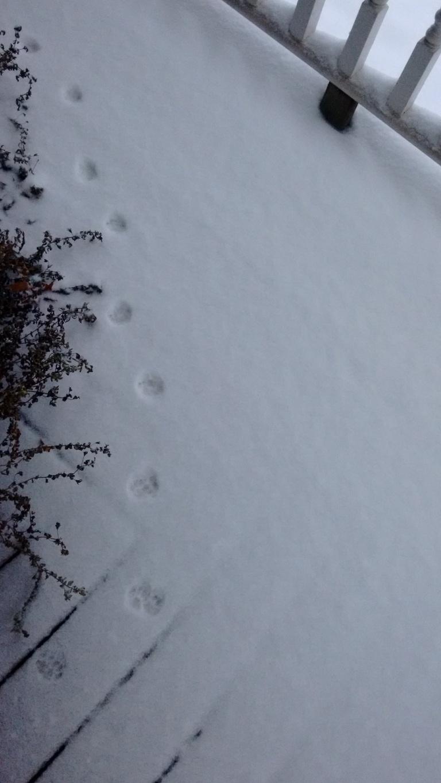 snow_dec-2016-6