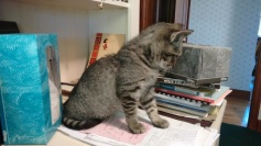 cats_sept-2016-12