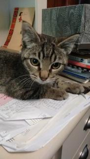 cats_sept-2016-14