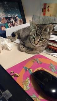 cats_sept-2016-9