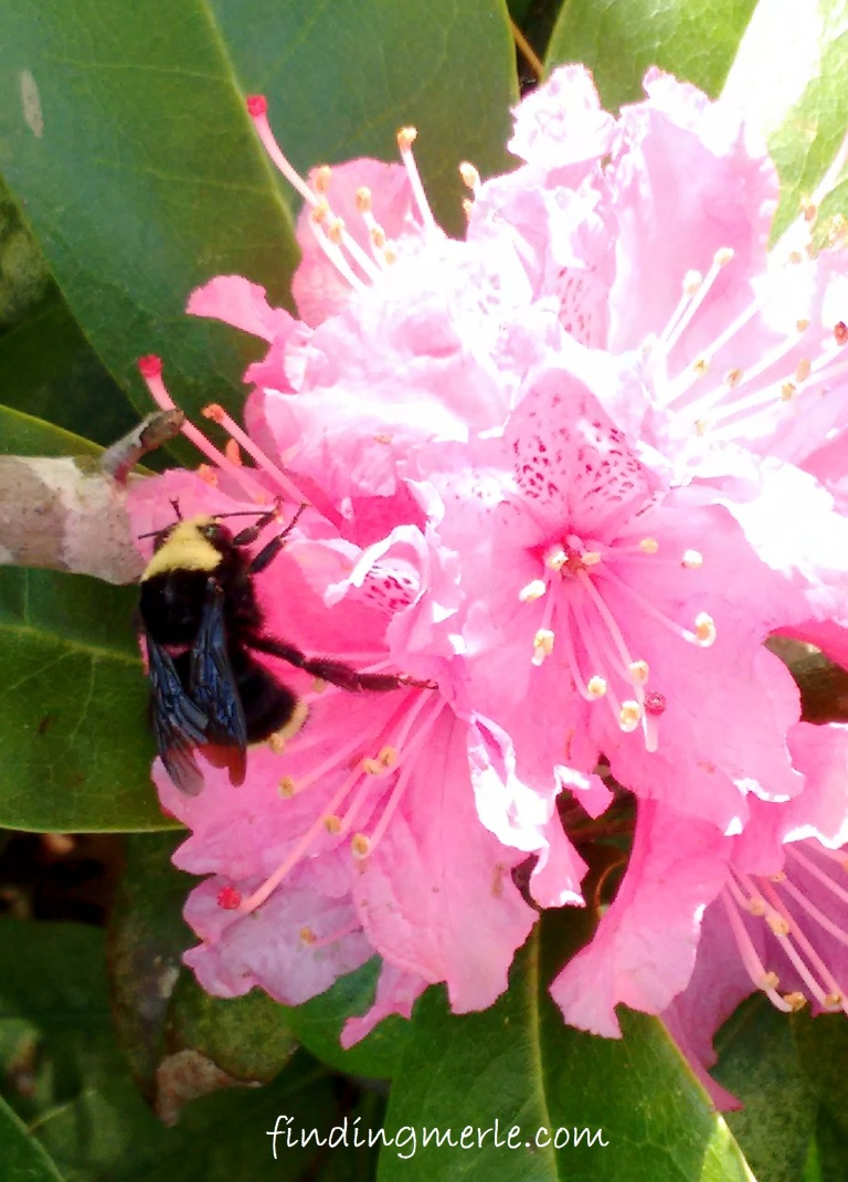 rhodie and the bee_may 2017