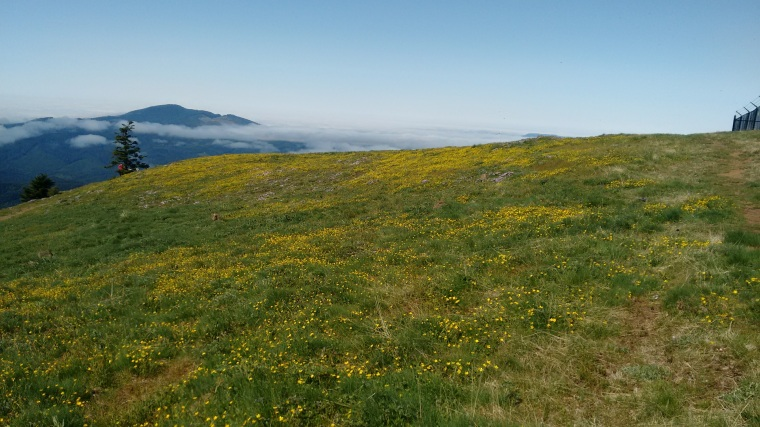 Marys Peak_1 (10)