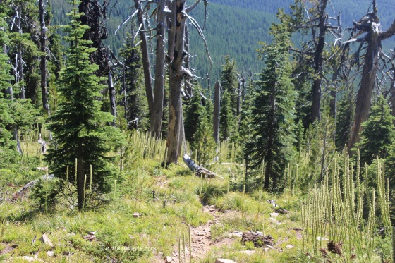 mt henry trail and bear grass