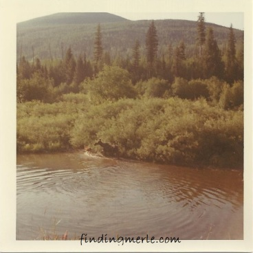 Yaak River_moose and her calf_1969c