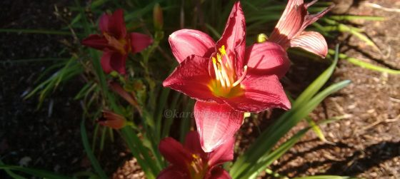 cropped-karen_red-lily.jpg